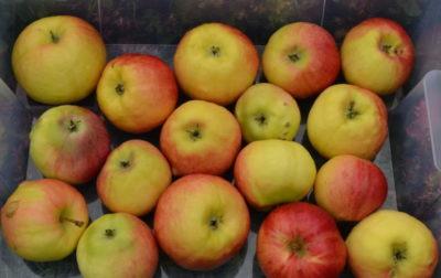 сколько сортов яблок в мире