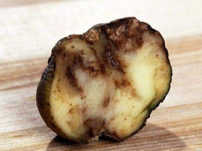 почему картошка чернеет после варки