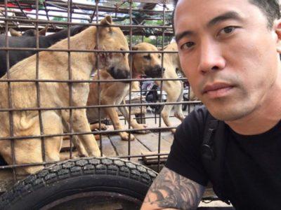 почему корейцы едят собак