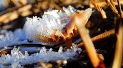 ледяной гриб что это