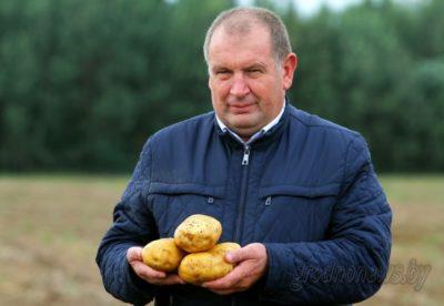 как картошка по белорусски